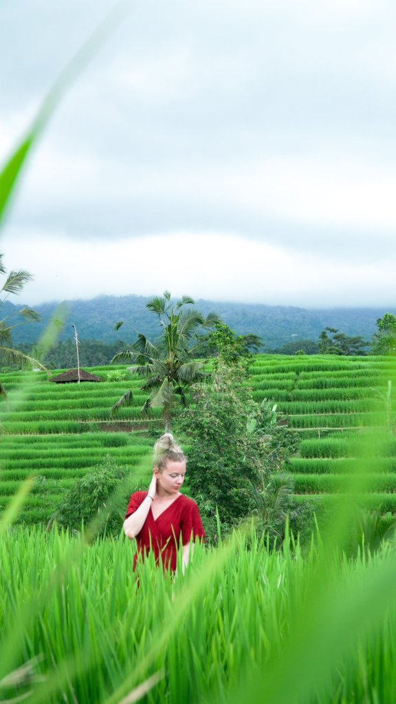Biggest rice terrace bali